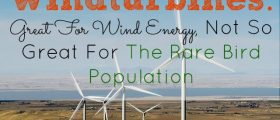 The Rare Bird Population, windturbines
