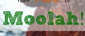 cattle investing,moolah