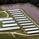 Unique Investment Opportunity | Hog Farm