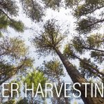 Investment Update, The Hidden Value Of Harvesting Timber