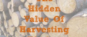 The Hidden Value Of Harvesting Timber , timber industry