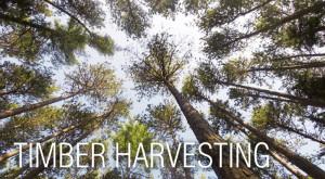 timberharvesting
